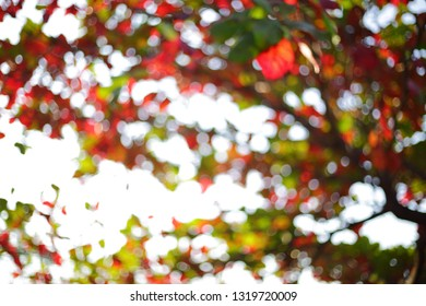 autumn morning day, abstract image of blur bokeh in nature