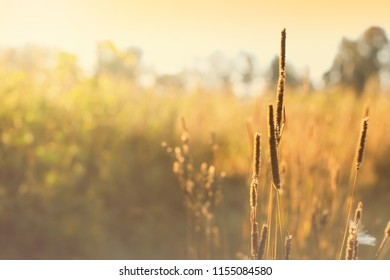 Autumn morning landscape in field, grass close-up, selective focus
