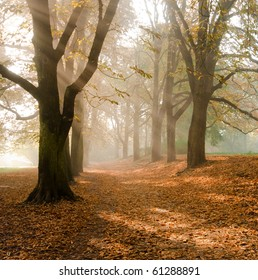 Autumn at the morning, park