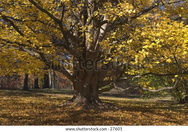 Autumn in Morton Arboretum