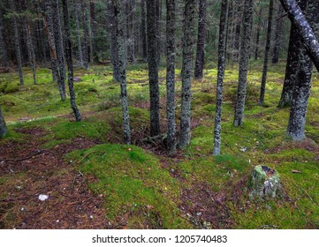 Autumn mossy forest trees background. Forest trees moss in autumn Karelia wilderness scene. Moss forest trees in rainforest backwoods Karelia. Forest trees moss view