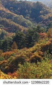 Autumn mountain (colored leaves)