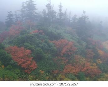 Autumn mountain in the fog