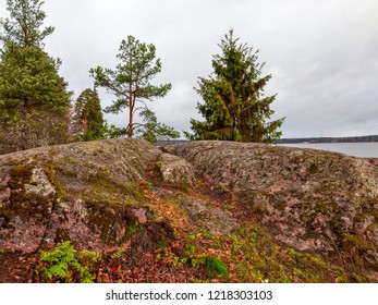 Autumn mountain forest rock view. Karelia mountain forest trees in autumn. Autumn mountain forest rocks. Karelia autumn forest rocks scene
