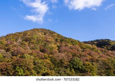 Autumn mountain, Japan