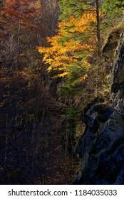 Autumn mountain landscape with golden tree