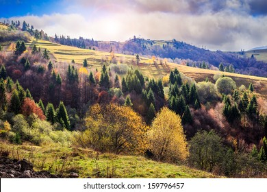 autumn mountain landscape. valley on the hillside with coniferous and yellowed trees in early morning