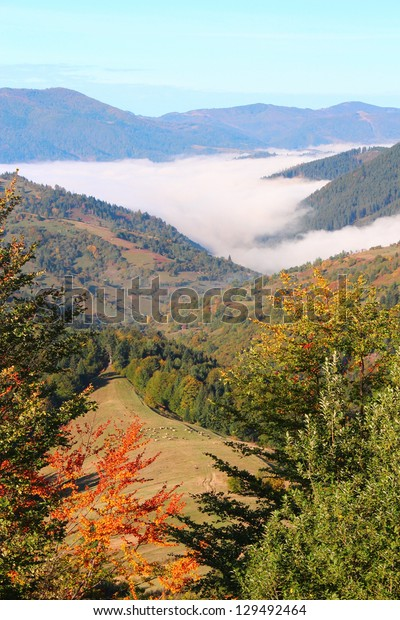 Autumn mountain morning landscape with colorful forest, fog and sheep