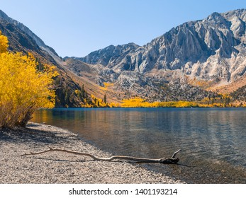 Autumn mountain scenery with a dead tree branch lying over the water on a pebble shore of Convict Lake. Selective focus on the water. Yellow trees and large granite mountain in the background.