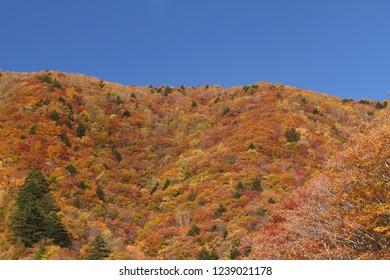 Autumn mountain turns autumn colour