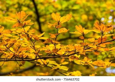 Autumn in mountains in the Czechia