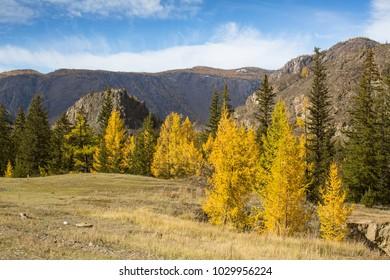 Autumn mountains landscapes, Altai Republic, Russia.