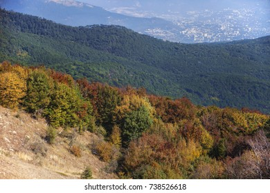 Autumn multicolored deciduous forest and green coniferous forest, and a city in the valley in the background.