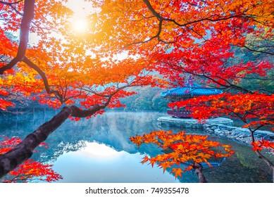 Autumn in Naejangsan National park, South Korea.