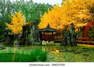 Autumn at Namami Island in South Korea.