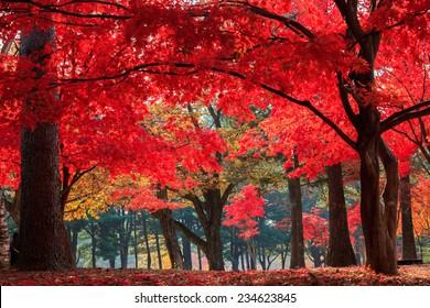 Autumn in Nami Island