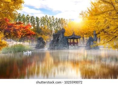 Autumn of Nami island in the moning South Korea.