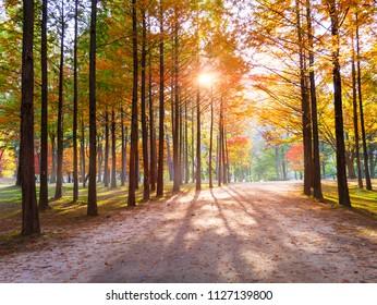 Autumn of Nami island South Korea.