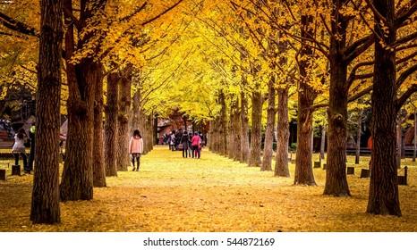 autumn nami island south korea