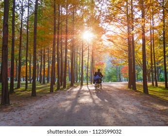 Autumn of Nami island at sunset South Korea.