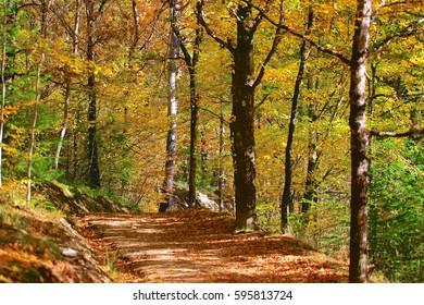 Autumn and Nature