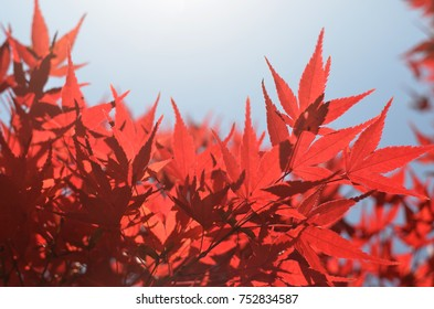 Autumn / Nature