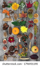 Autumn nature composition for botanical study with food, flora and fauna on rustic wood background. Top view. Harvest festival theme.
