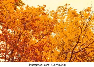 Autumn nature, fall leaves and trees outdoors, cold season