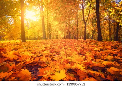 Autumn nature. Fall scene. Tranquil background. Colorful foliage on trees and path in park. Bright sun shining over road through trees with yellow orange red leaves.