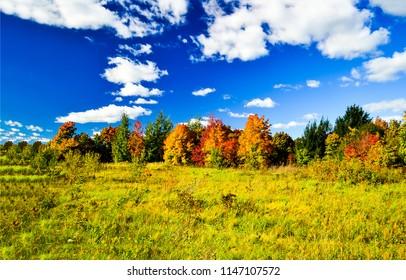 Autumn nature forest trees landscape. Autumn forest trees in sunny day view. Autumn nature season view