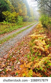 Autumn nature forest way rainy day