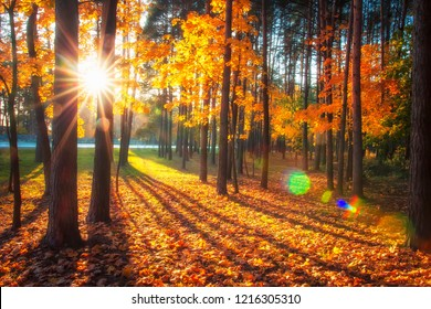 Autumn nature landscape with bright sunbeams. Colored trees in sunlight in forest. Autumn forest. Fall nature. Autumn picturesque background. Warm day outdoors. Sunrays through trees in woodland.