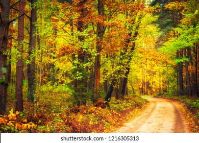 Autumn nature landscape. Colorful autumn forest with yellow trees along road. Path in woodland