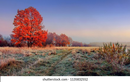 Autumn nature landscape. Colorful red foliage on branches of tree at meadow with hoarfrost on grass in the morning. Panoramic view on scenic nature at fall. Perfect morning at outdoor in november.