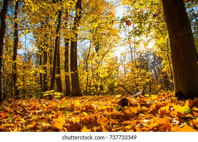 Autumn nature landscape outdoor forest. Fallen leaves in the park in the background of sunlight.
