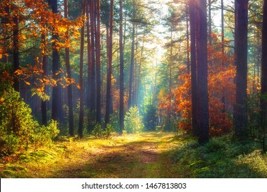 Autumn nature landscape. Sunny autumn forest. Beautiful colorful trees in woodland. Scenic wild nature - Shutterstock ID 1467813803