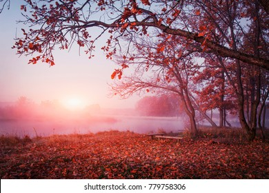 Autumn nature. Landscape of sunrise over river in autumn foggy morning. Red foliage falls to ground. Calm Autumn Nature