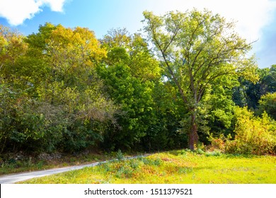 Autumn nature landscape with trees and dirt road