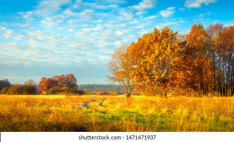 Autumn nature. October landscape on sunny bright day. Colorful trees on beautiful meadow in the morning