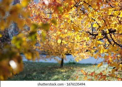 autumn nature orange leaves, yellow leaves