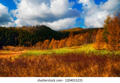 Autumn nature of the South of Sakhalin.