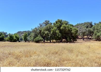 Autumn nature in the Topanga Canyon Park. California.