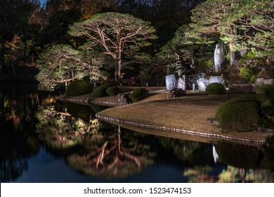 Autumn night light-up of big pine trees around a pond and the islet of the Rikugien garden in Tokyo.