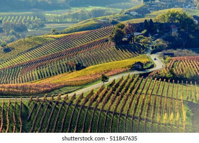 Autumn in northern italy region called langhe with colorful wine-yards
