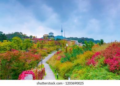 Autumn at Numsan park best landmark in  Seoul,South Korea and N Seoul tower