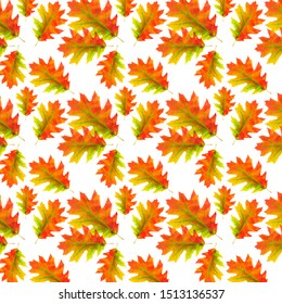 Autumn oak leaf isolate on a white background. Fall of the leaf. Multi-colored dry oak leaf. Wilted leaf of an American oak. Evenly repeating pattern.