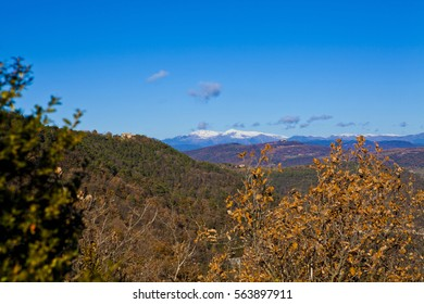 Autumn oak and pine forest with a snowed Pyrenean mountains background