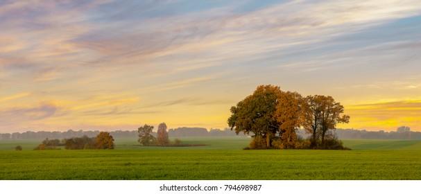 autumn oaks on a green field