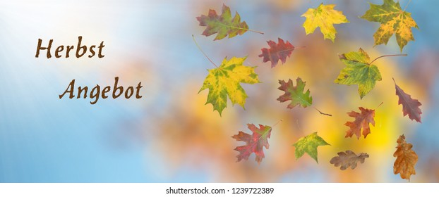 Autumn offer with autumn leaves