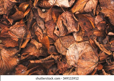 Autumn old fallen leaves background texture